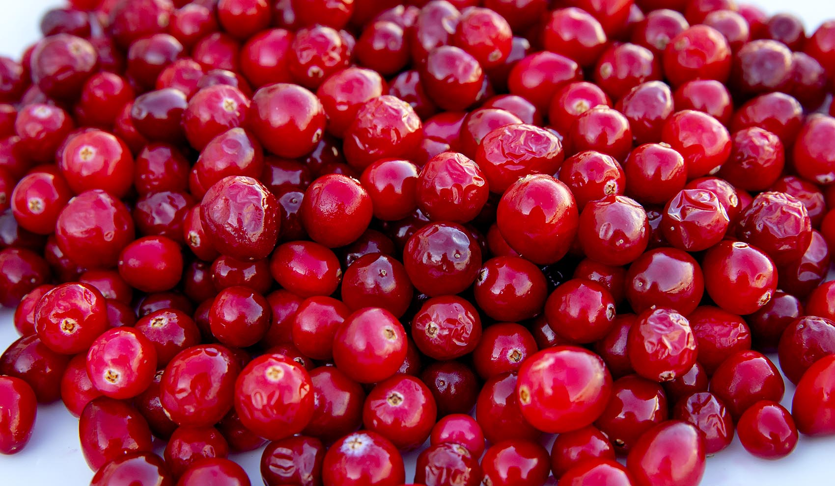 Truckers will haul millions of pounds of cranberries for Thanksgiving